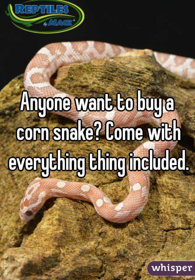 Anyone want to buy a corn snake? Come with everything thing included.
