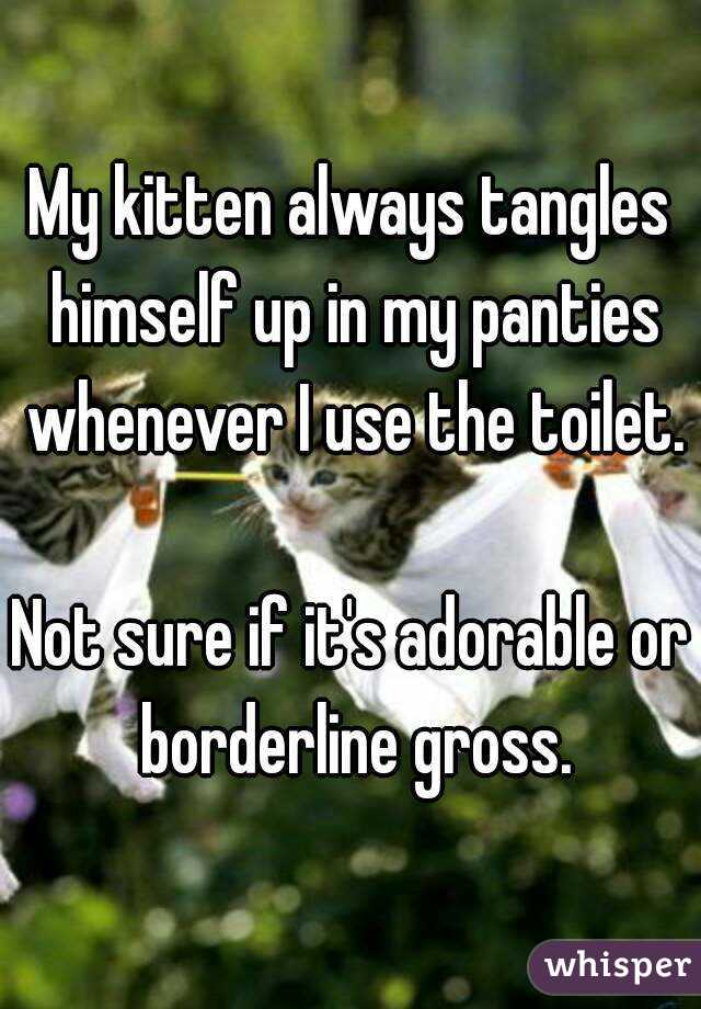 My kitten always tangles himself up in my panties whenever I use the toilet.  Not sure if it's adorable or borderline gross.