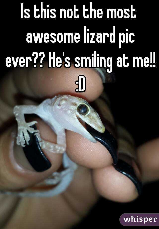Is this not the most awesome lizard pic ever?? He's smiling at me!! :D