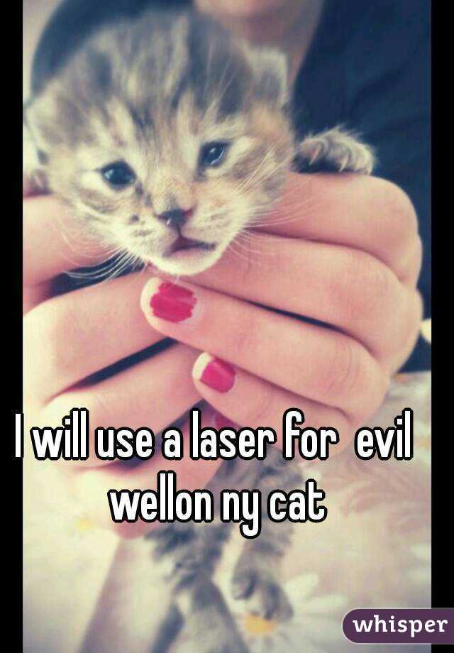 I will use a laser for  evil  wellon ny cat