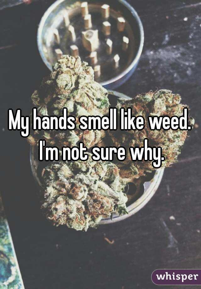 My hands smell like weed. I'm not sure why.