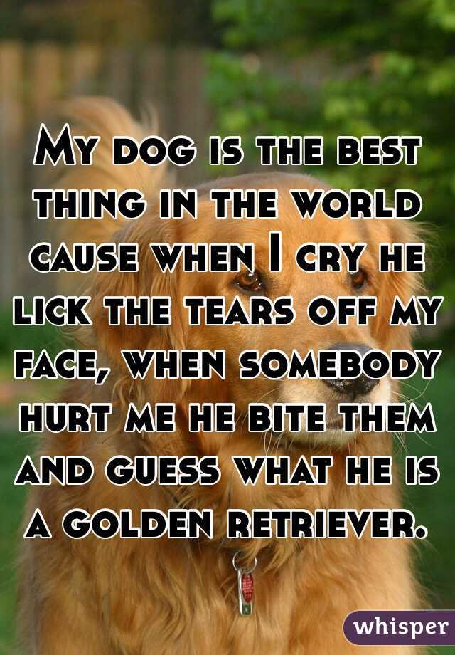 My dog is the best thing in the world cause when I cry he lick the tears off my face, when somebody hurt me he bite them and guess what he is a golden retriever.
