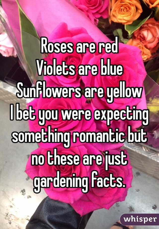 Roses are red Violets are blue Sunflowers are yellow I bet you were expecting something romantic but no these are just gardening facts.