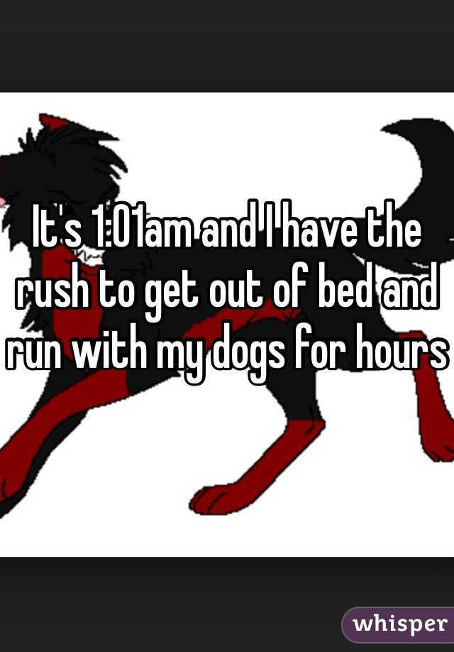 It's 1:01am and I have the rush to get out of bed and run with my dogs for hours