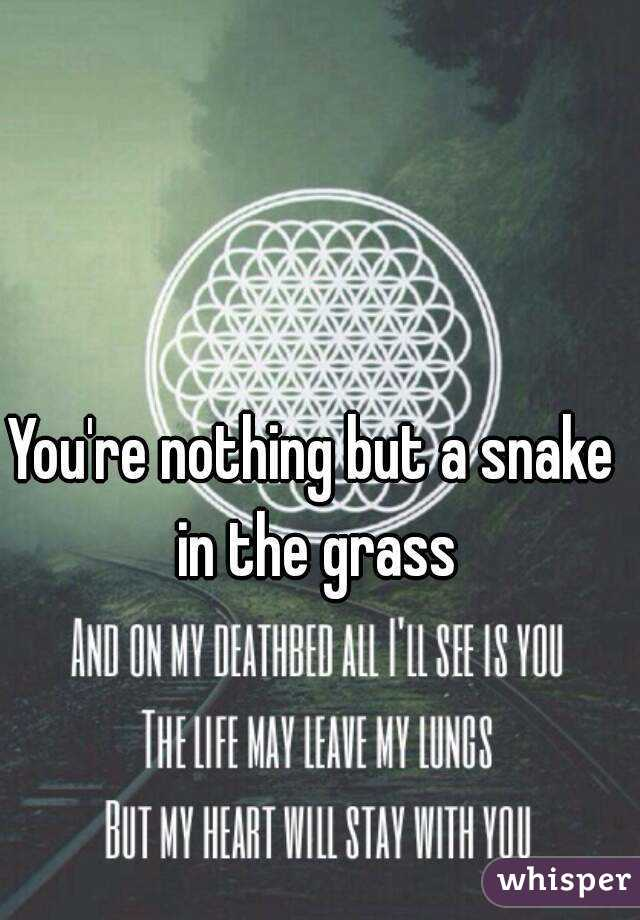 You're nothing but a snake in the grass