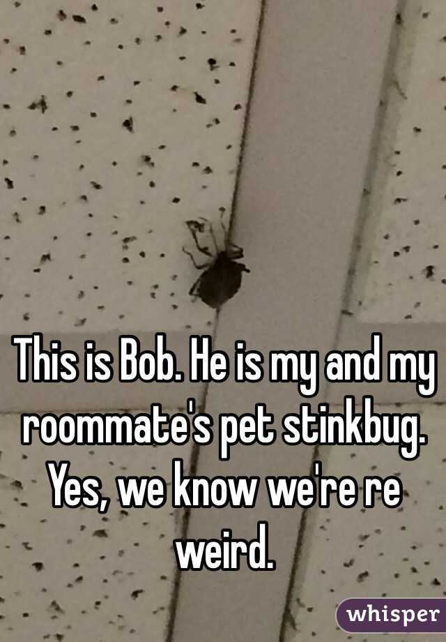 This is Bob. He is my and my roommate's pet stinkbug. Yes, we know we're re weird.