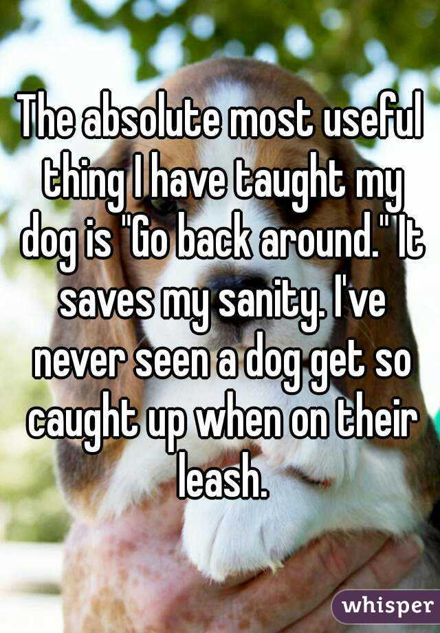 "The absolute most useful thing I have taught my dog is ""Go back around."" It saves my sanity. I've never seen a dog get so caught up when on their leash."