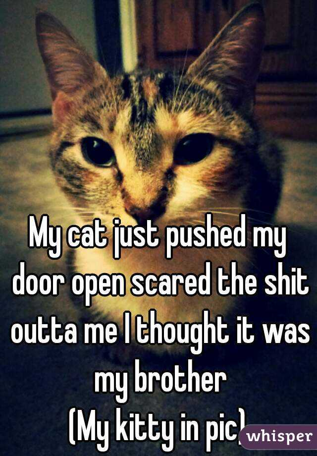 My cat just pushed my door open scared the shit outta me I thought it was my brother (My kitty in pic)
