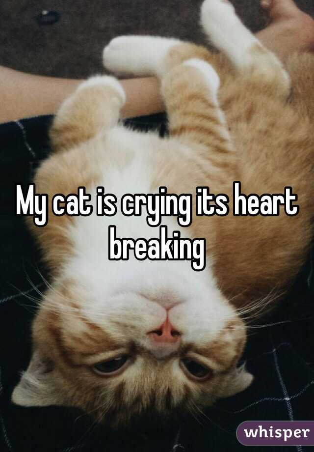 Crying Cat Meme With Hearts ~ Meme Creation