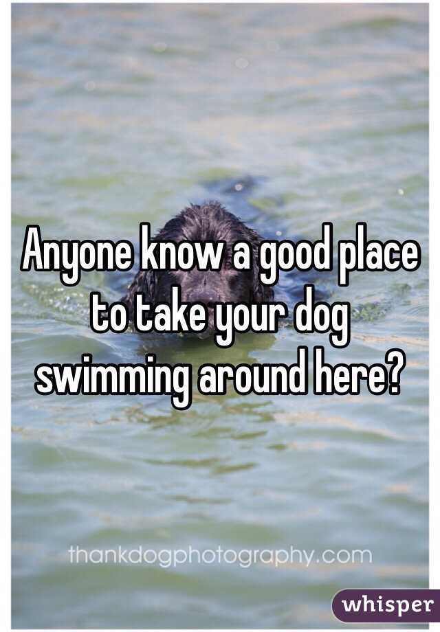 Anyone know a good place to take your dog swimming around here?