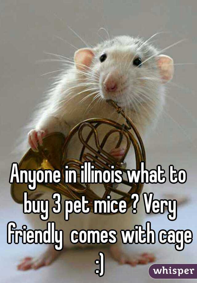 Anyone in illinois what to buy 3 pet mice ? Very friendly  comes with cage :)