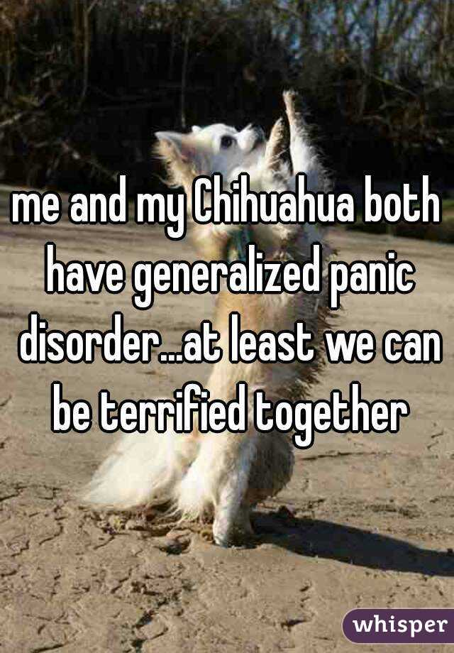 me and my Chihuahua both have generalized panic disorder...at least we can be terrified together