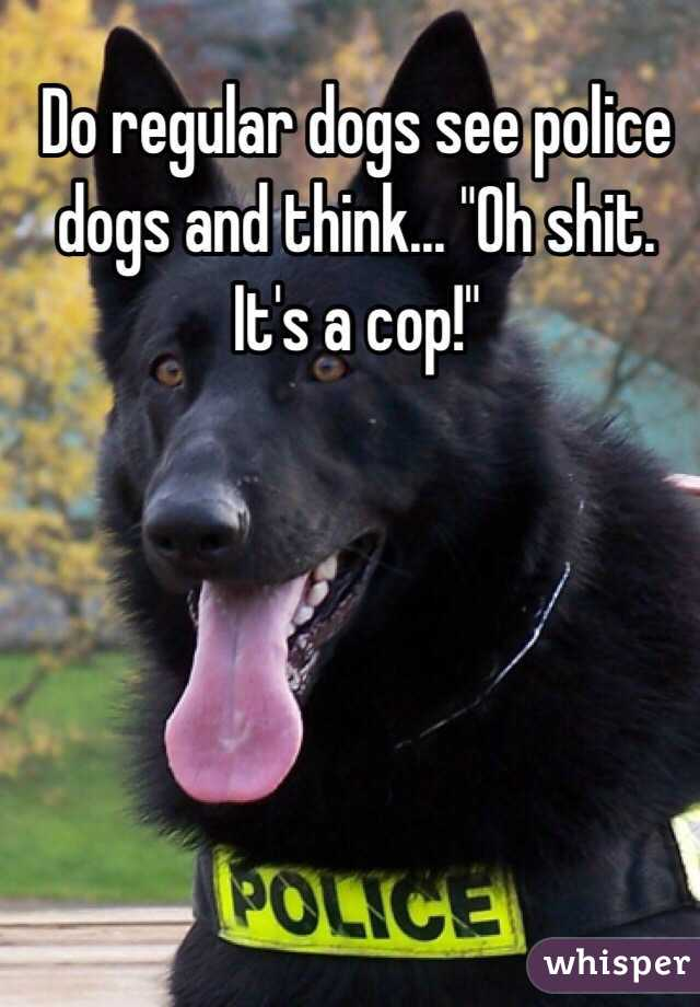 """Do regular dogs see police dogs and think... """"Oh shit. It's a cop!"""""""