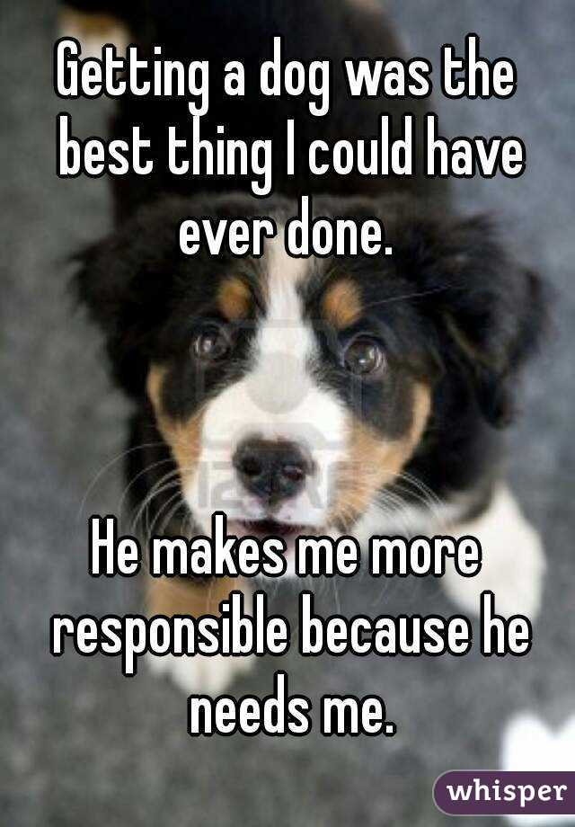 Getting a dog was the best thing I could have ever done.     He makes me more responsible because he needs me.