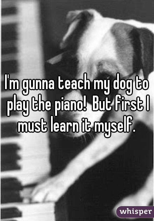 I'm gunna teach my dog to play the piano!  But first I must learn it myself.