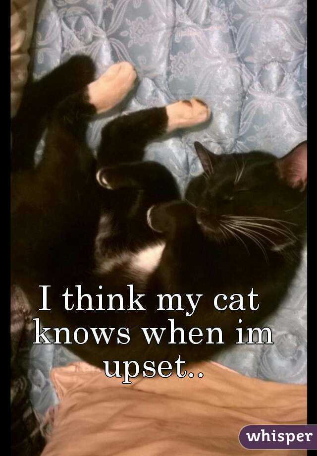 I think my cat knows when im upset..