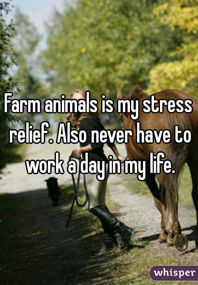 Farm animals is my stress relief. Also never have to work a day in my life.