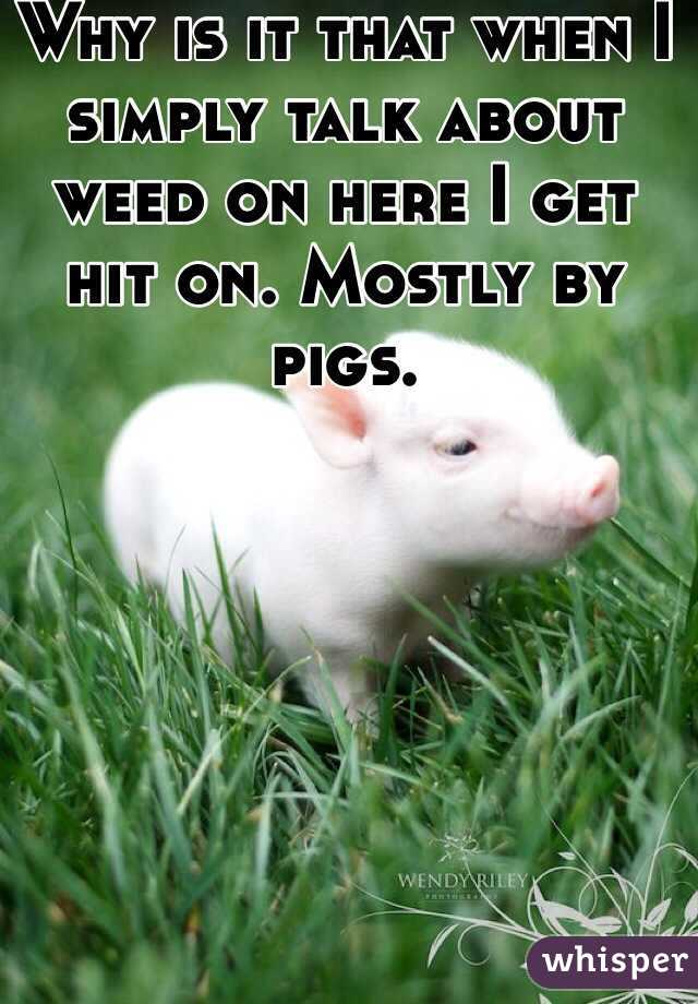 Why is it that when I simply talk about weed on here I get hit on. Mostly by pigs.