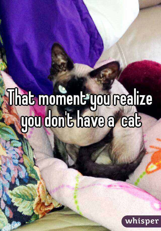 That moment you realize you don't have a  cat