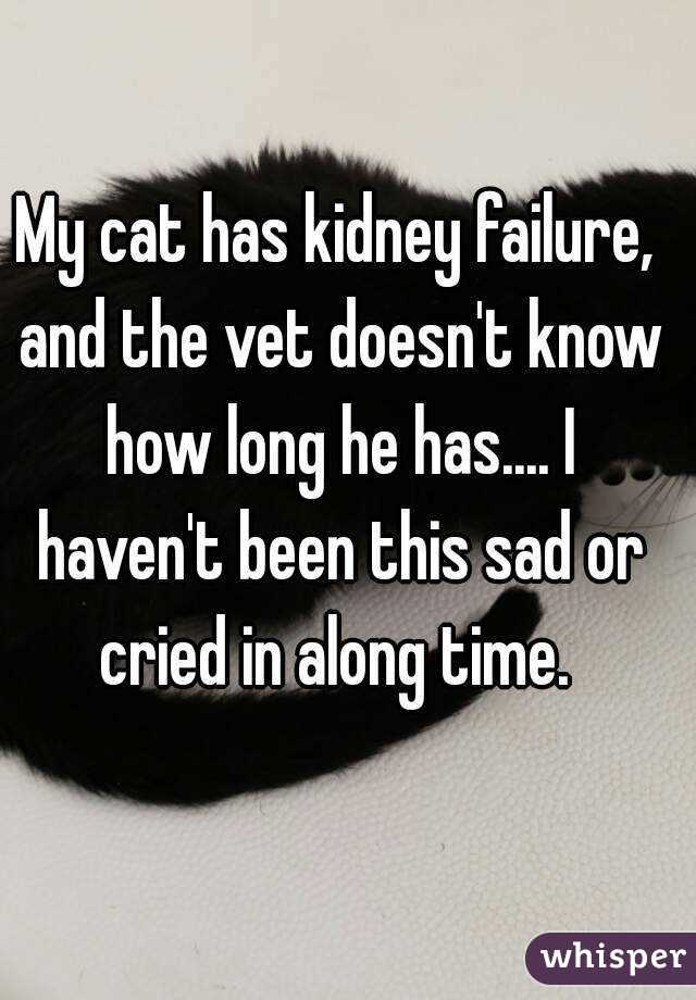 My cat has kidney failure, and the vet doesn't know how long he has.... I haven't been this sad or cried in along time.