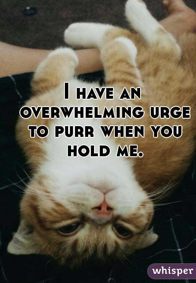 I have an overwhelming urge to purr when you hold me.