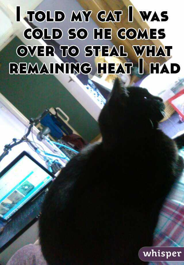 I told my cat I was cold so he comes over to steal what remaining heat I had