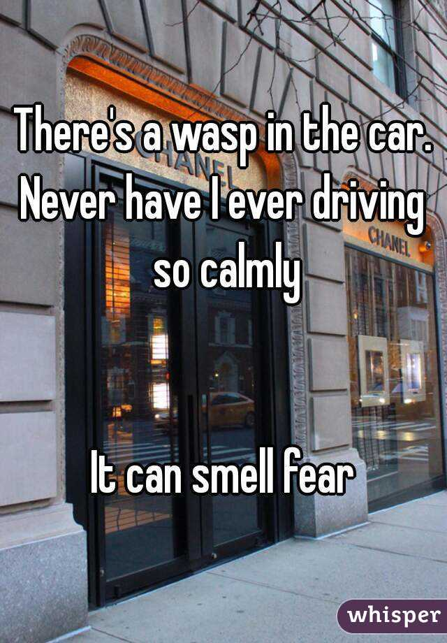 There's a wasp in the car. Never have I ever driving so calmly   It can smell fear