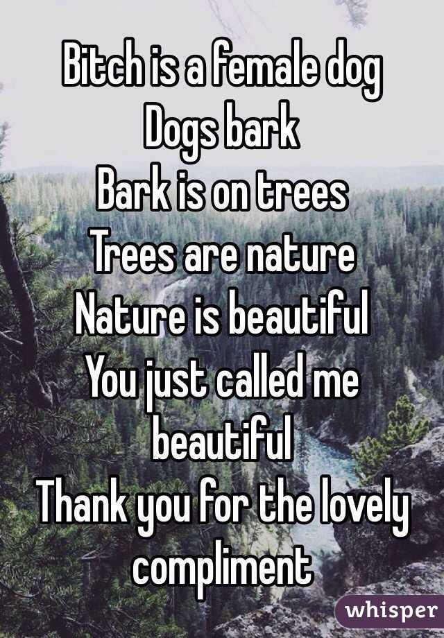 Bark is