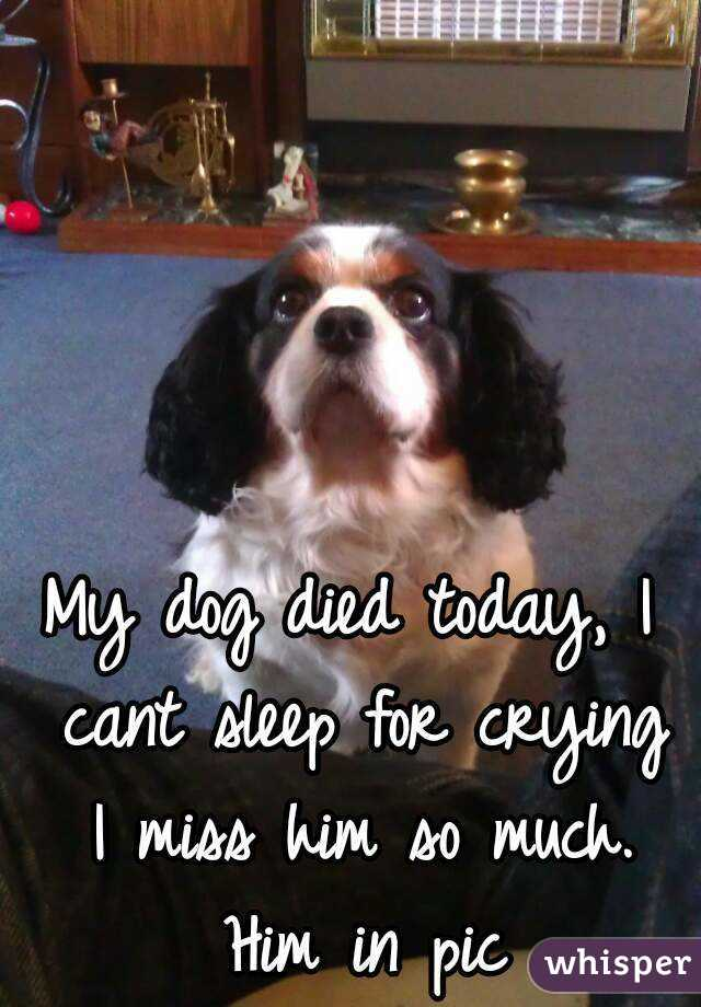 my dog died today i cant sleep for crying i miss him so much him in