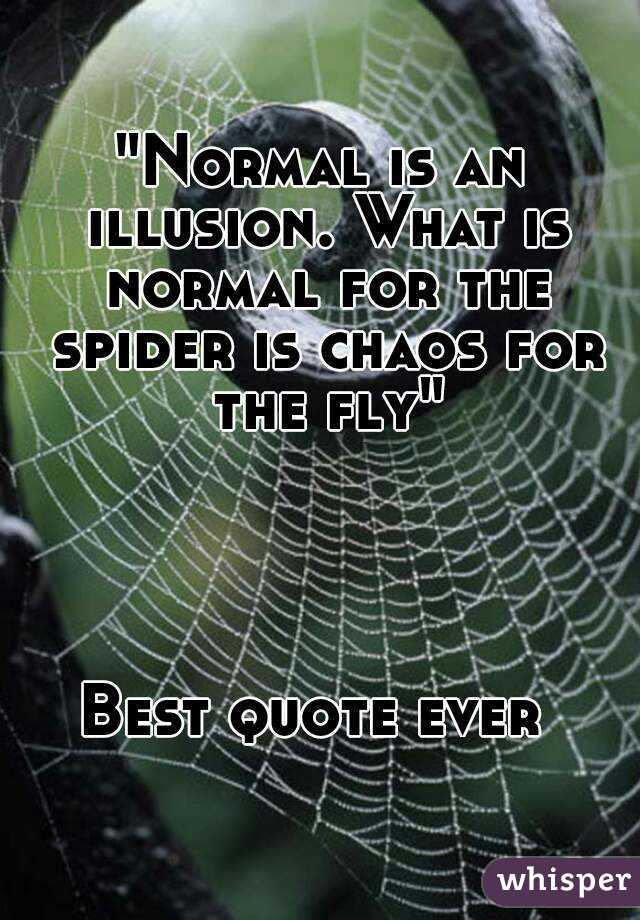 Normal is an illusion what is normal for the spider is chaos for normal is an illusion what is normal for the spider is chaos for the fly best altavistaventures Choice Image