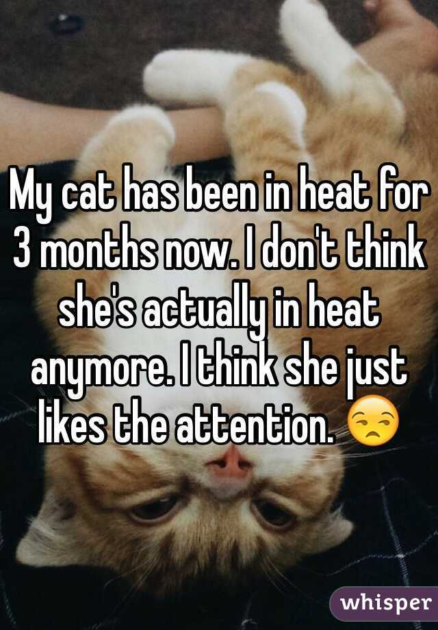 My cat has been in heat for 3 months now. I don't think she's actually in heat anymore. I think she just likes the attention. 😒