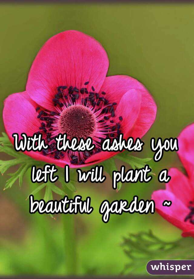 With these ashes you left I will plant a beautiful garden ~