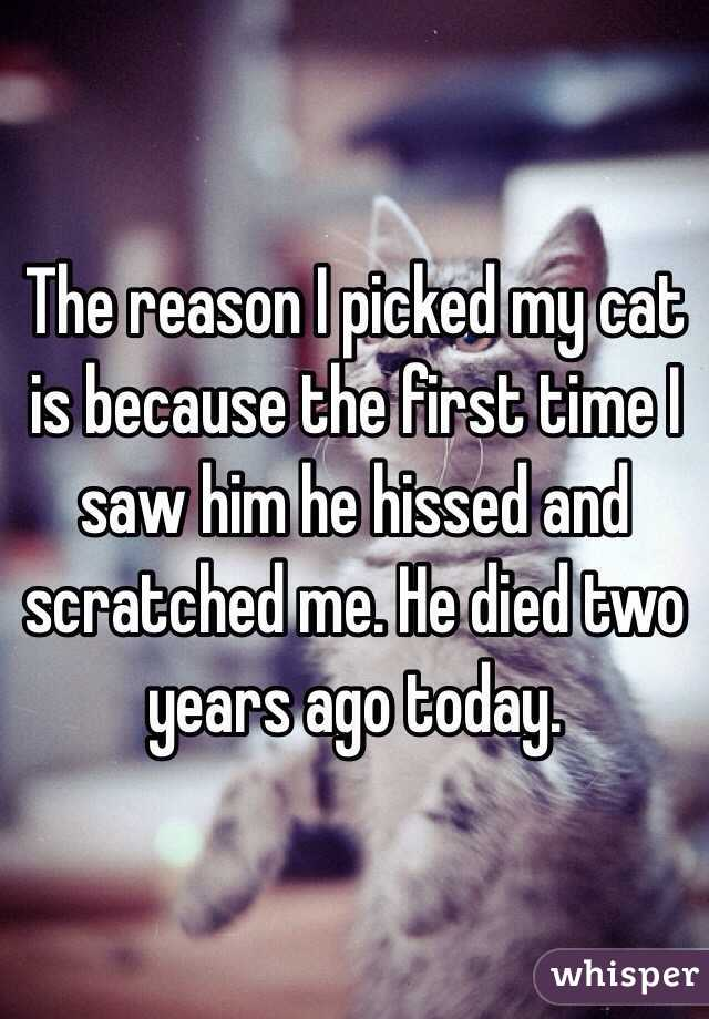 The reason I picked my cat is because the first time I saw him he hissed and scratched me. He died two years ago today.