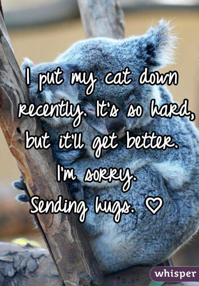 I put my cat down recently. It's so hard, but it'll get better.  I'm sorry.  Sending hugs. ♡