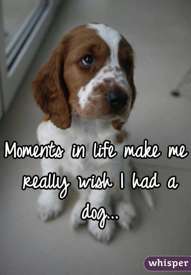 Moments in life make me really wish I had a dog...