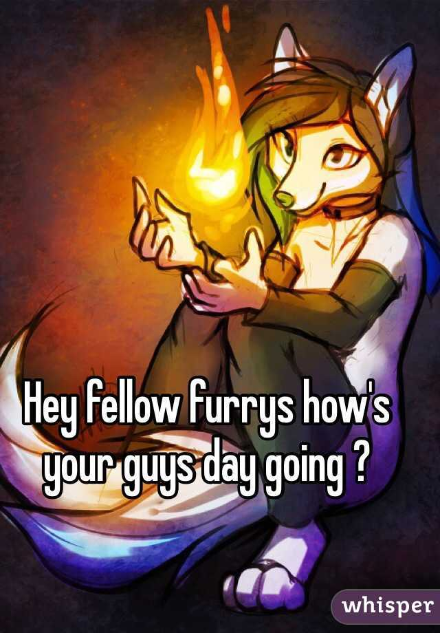 Hey fellow furrys how's your guys day going ?