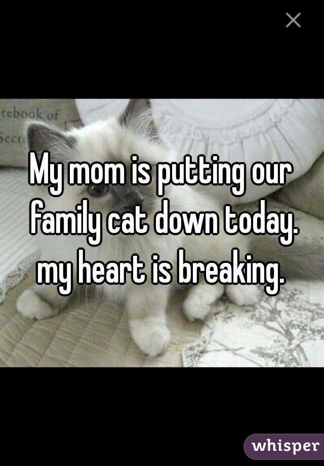 My mom is putting our family cat down today. my heart is breaking.