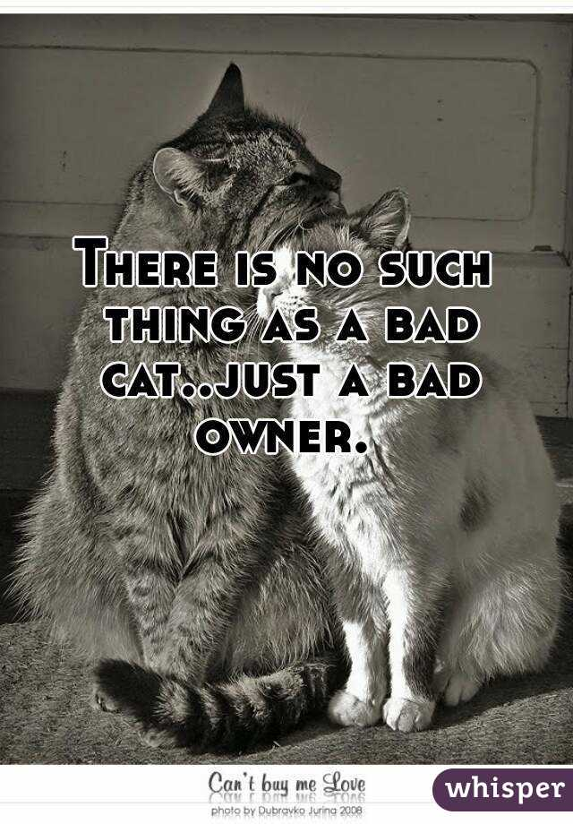 There is no such thing as a bad cat..just a bad owner.