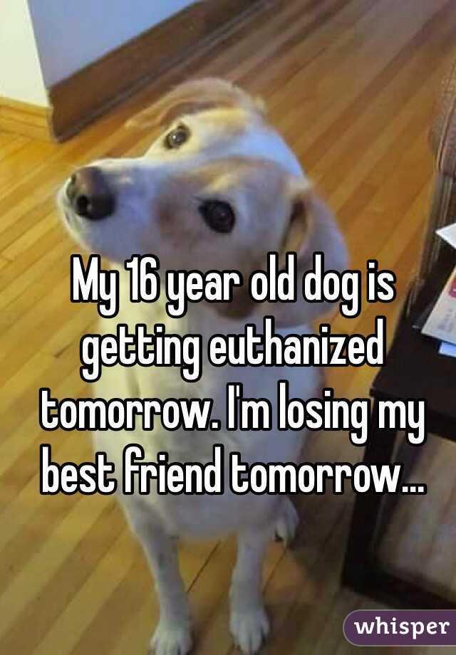 My 16 year old dog is getting euthanized tomorrow. I'm losing my best friend tomorrow...