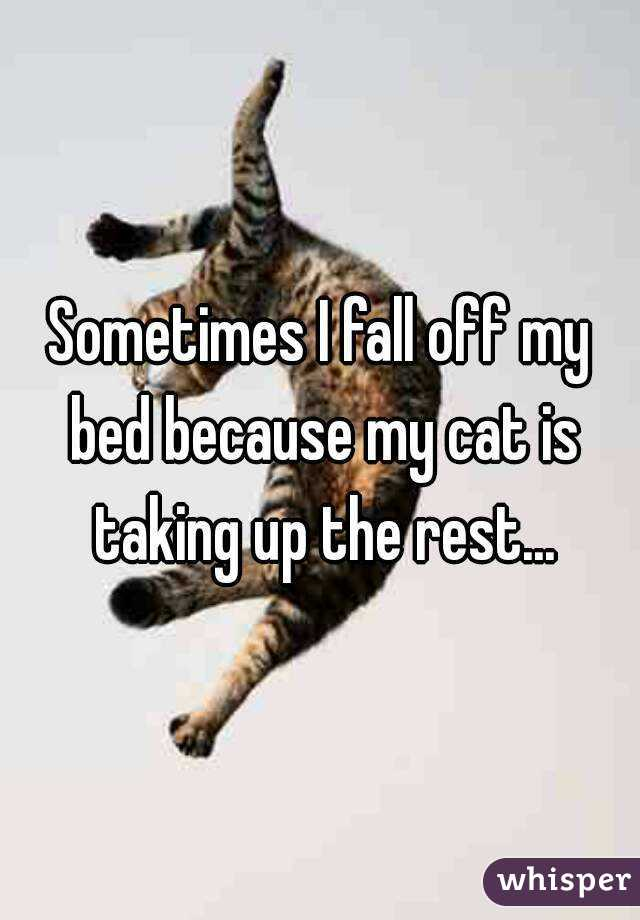 Sometimes I fall off my bed because my cat is taking up the rest...