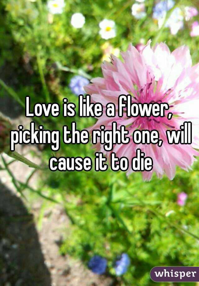 Love is like a flower, picking the right one, will cause it to die