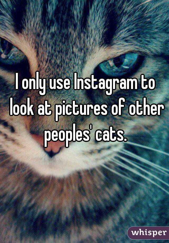 I only use Instagram to look at pictures of other peoples' cats.