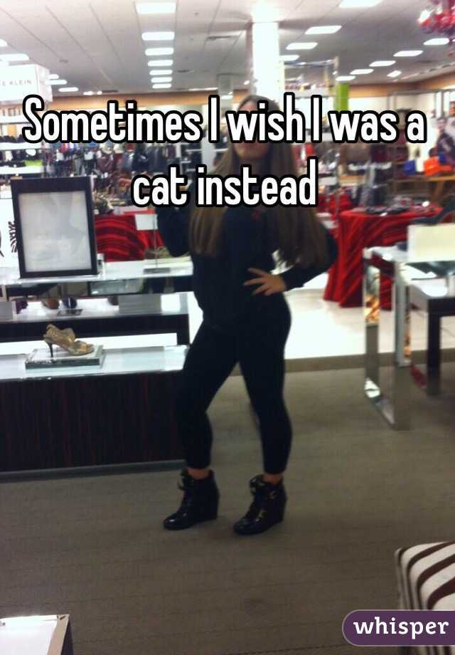 Sometimes I wish I was a cat instead