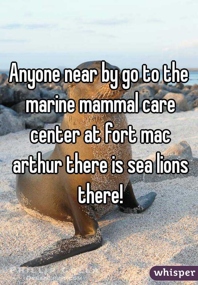 Anyone near by go to the marine mammal care center at fort mac arthur there is sea lions there!