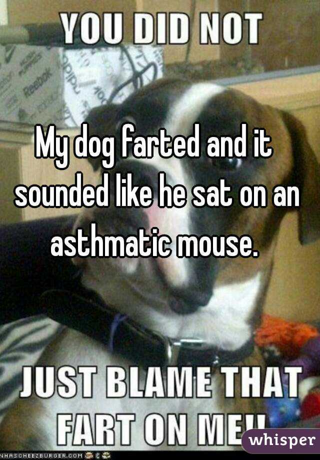My dog farted and it sounded like he sat on an asthmatic mouse.