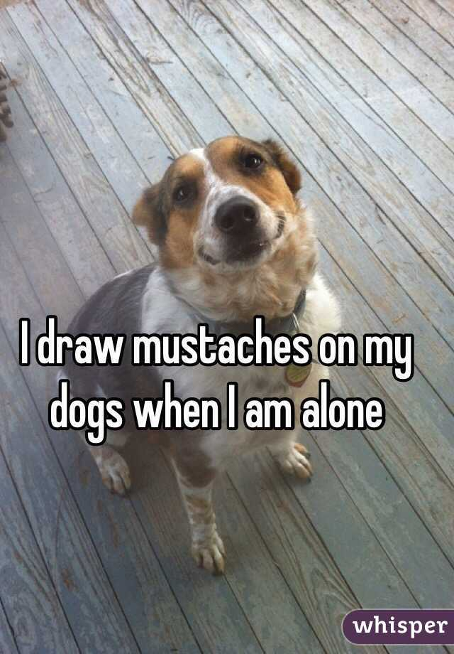 I draw mustaches on my dogs when I am alone