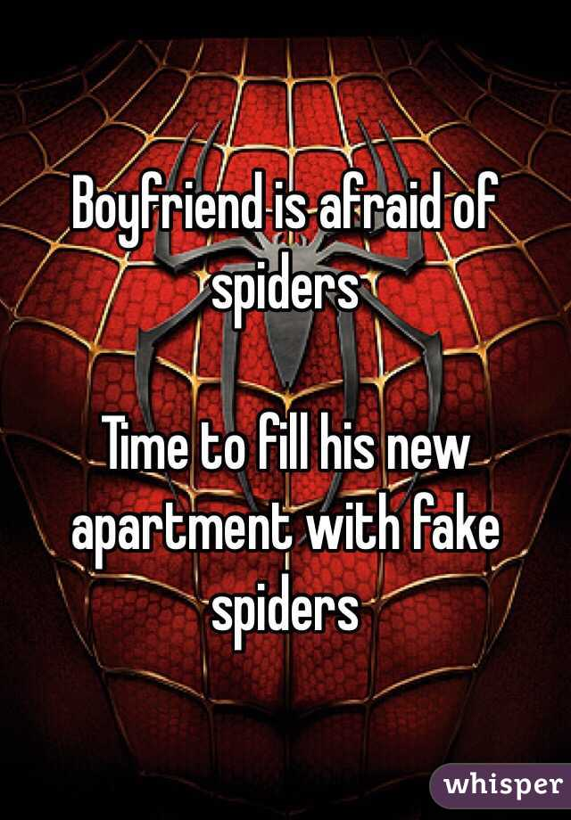 Boyfriend is afraid of spiders  Time to fill his new apartment with fake spiders