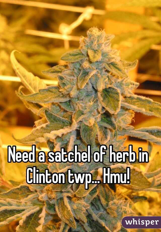 Need a satchel of herb in Clinton twp... Hmu!