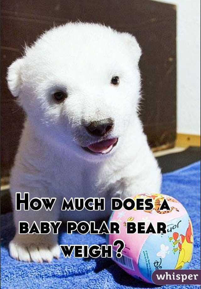 how much a polar bear weighs
