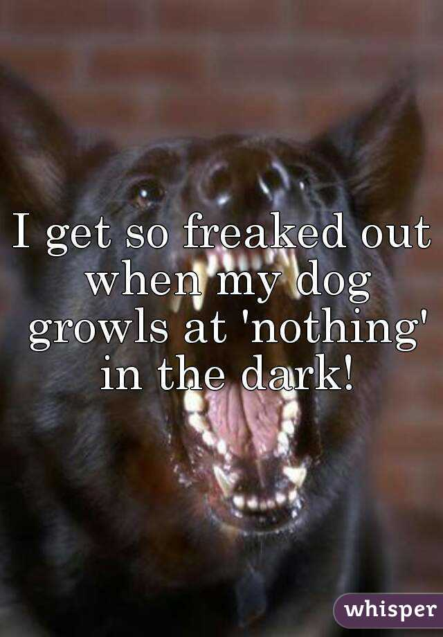 I get so freaked out when my dog growls at 'nothing' in the dark!